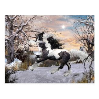 Carte postale gitane de cheval de Vanner
