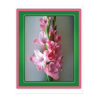 Carte Postale Glaïeul rose