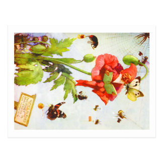 Carte Postale Gnome de pavot