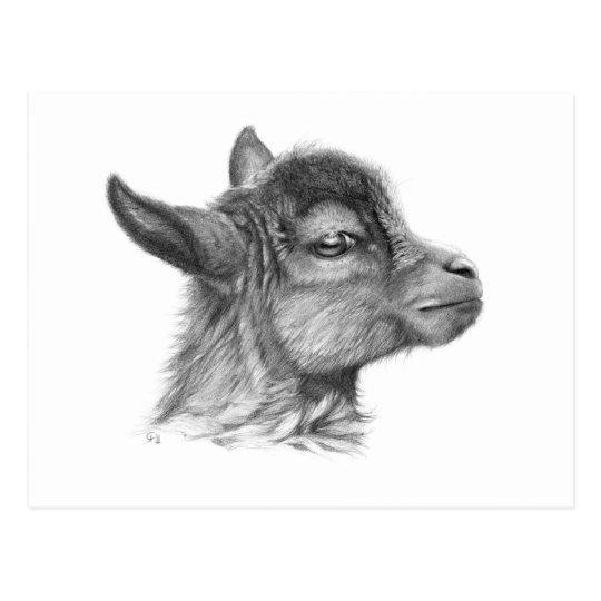 Carte Postale Goat Baby G099