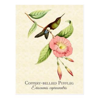 Carte postale gonflée cuivreuse d'art de colibri
