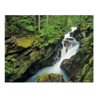 Carte Postale Gorge d'avalanche en parc national de glacier