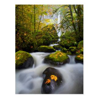 Carte Postale Gorge de l'érable | Colombie de Bigleaf de crique