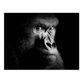 Carte Postale Gorille