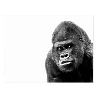 Carte Postale Gorille blanc noir