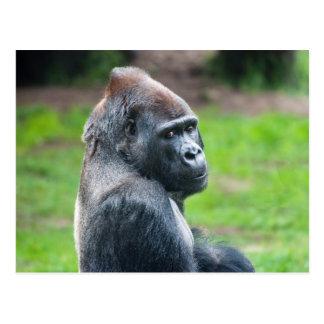 Carte Postale Gorille de plaine occidentale
