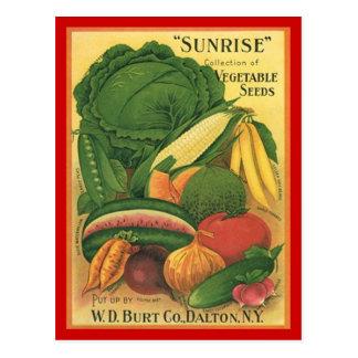 Carte Postale Graines antiques vintages de légume de Burt Co de
