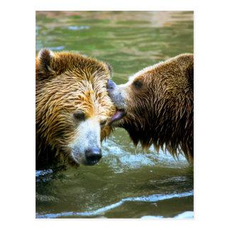 Carte Postale Grand baiser d'ours gris