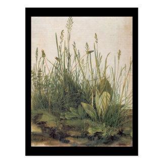 Carte Postale Grand morceau d'Albrecht Durer de gazon