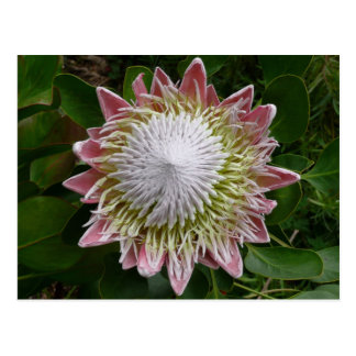 Carte Postale Grande nature de fleur rose et blanche florale