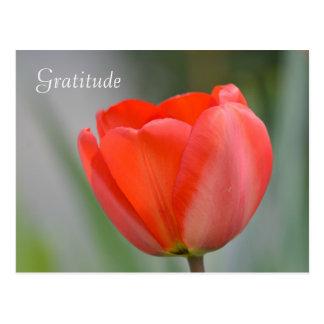 Carte Postale Gratitude florale de tulipe rouge