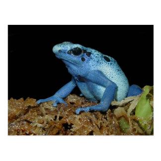 Carte Postale Grenouille bleue de dard (azureus de Dendrobates)