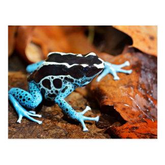 Carte Postale Grenouille bleue Dendrobates Tinctorius de dard