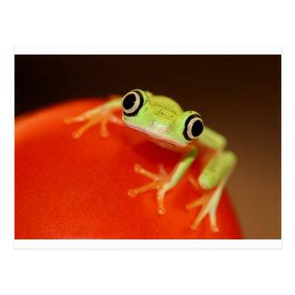 Carte Postale grenouille d'arbre