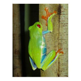 Carte Postale grenouille d'arbre aux yeux rouges