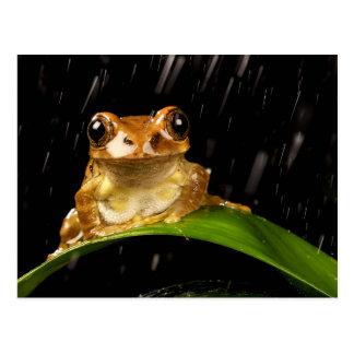 Carte Postale Grenouille d'arbre d'or dans l'image de pluie