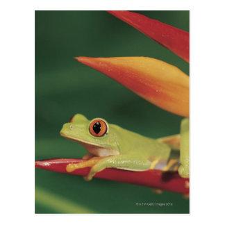 Carte Postale Grenouille d'arbre rouge d'oeil se reposant sur la