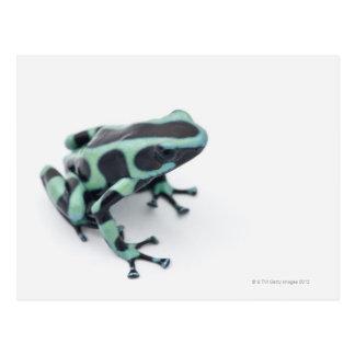 Carte Postale grenouille noire et verte de dard de poison