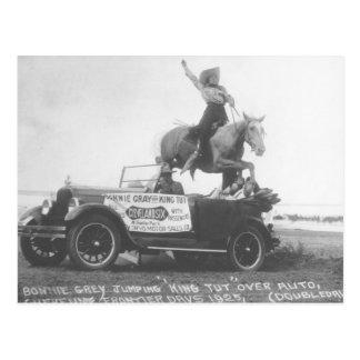 Carte Postale Gris mignon sautant son cheval
