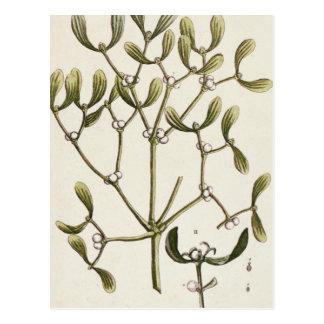 """Carte Postale Gui """"d'un de fines herbes curieux"""", 1782"""