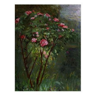 Carte Postale Gustave Caillebotte- rosier en fleur