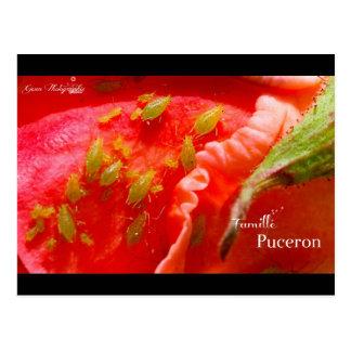 Carte Postale Gwen Photographie - Famille Puceron