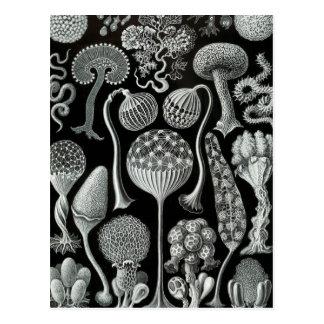 Carte Postale Haeckel Mycetozoa