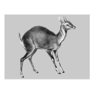 Carte Postale Haeckel quatre cerfs communs à cornes