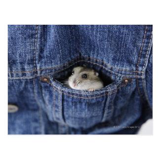Carte Postale Hamster dans la poche