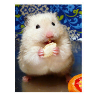 Carte Postale Hamster syrien pelucheux Kokolinka mangeant une