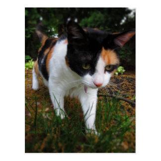 Carte Postale Harmonie, mon chat de calicot