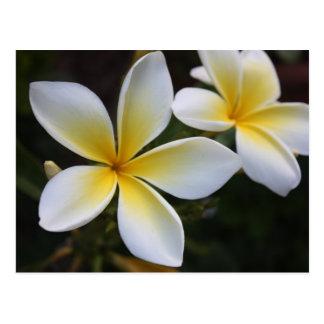 Carte postale hawaïenne