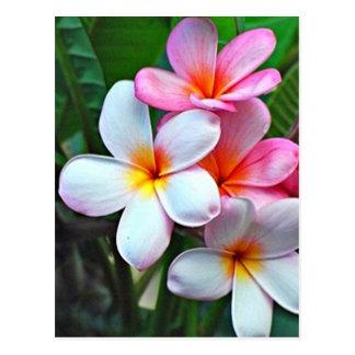 Carte postale hawaïenne de fleur de ketmie