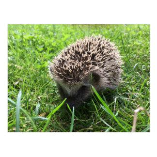 Carte Postale hedgehog