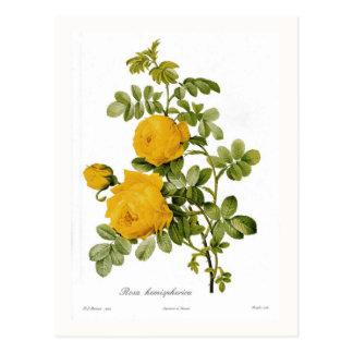 Carte Postale Hemispherica de Rosa