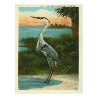 Carte Postale Héron bleu vintage la Floride