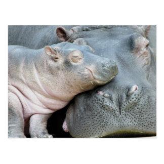 Carte Postale Hippopotame