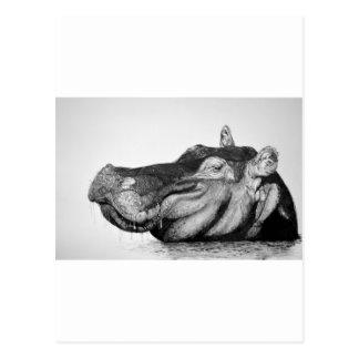Carte Postale Hippopotame paresseux