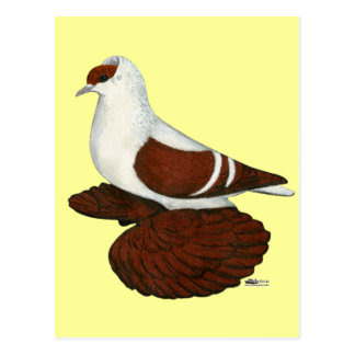 Carte Postale Hirondelle :  Fullhead rouge