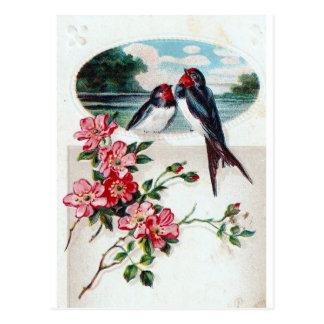 Carte Postale Hirondelles de grange vintages