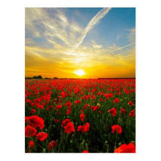 Carte Postale Horizon merveilleux de coucher du soleil de champ
