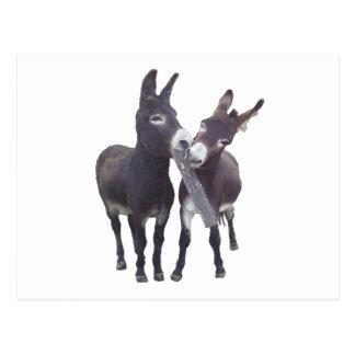 """Carte postale horizontale """"des ânes de la fillette"""