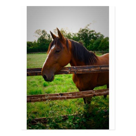 Carte Postale Horse in the field/ Un cheval dans le pré