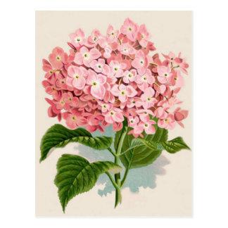 Carte Postale Hortensia rose vintage