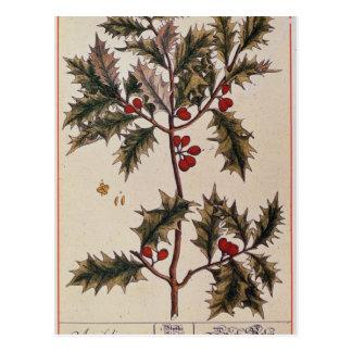 """Carte Postale Houx """"d'un de fines herbes curieux"""", 1782"""