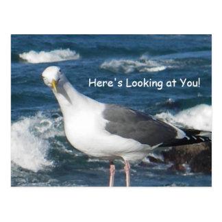 Carte postale :  Ici vous regarde mouette