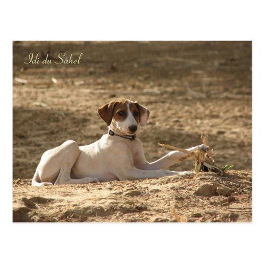 Carte postale Idi du Sahel