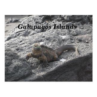 Carte Postale Îles de Galapagos