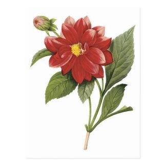 Carte Postale Illistration botanique de fleur rouge ; Double