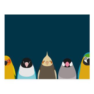 Carte Postale Illustration de cinq oiseaux - tores aucun iro
